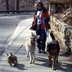 let the dogs out quality pet care in the beach east toronto With bonded dog walker