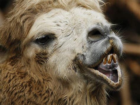 Global Art: ugly animals pics