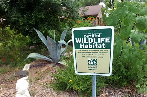 local wildlife habitat siege meanwhile martin