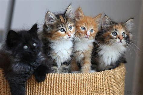 chats mignons photos de nos animaux