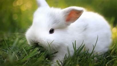 Bunnies Bunny Tablet