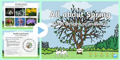 * New * Ks1 All About Spring Powerpoint Englishromanian