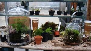 Terrarium Plante Deco : am nager un terrarium pour une plante carnivore marie claire ~ Dode.kayakingforconservation.com Idées de Décoration