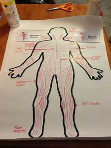 Muscular System  Jj