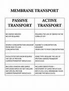 Passive Transport Vers...