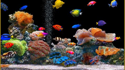 Aquarium Wallpaper Animated Free - animated aquarium desktop wallpaper 53 images