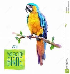 Fashion Bird Erfahrungen : red green macaw ara parrot on branch isolated watercolor illustration royalty free cartoon ~ Markanthonyermac.com Haus und Dekorationen