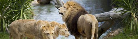 Profitez de 32 % de réduction en moyenne, en réservant à l'avance†. Bannière Zoo de Beauval - Chambres d'hôtes - Le Petit Nancay