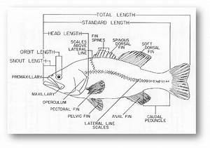 Labelled Diagram Of A Fish