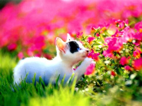kitten wallpapers kittens desktop flowers forest