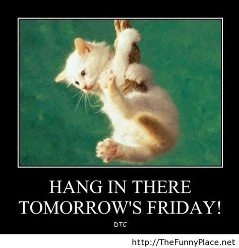Best Of Hang In There Quotes Funny Images On Mesgulsinyali