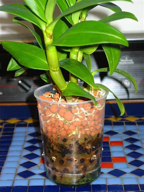 sch駑a chambre de culture les orchidees et l hydroculture la suite