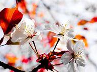 Free Bright Spring Flowers Desktop Wallpaper