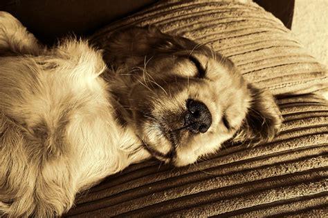 hund hat durchfall  tun hausmittel gruende und mehr