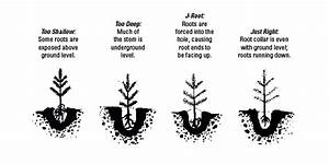 Tree Seedling Planting Instructions