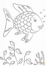 Fish Rainbow Coloring Template Pages Printable Comments sketch template
