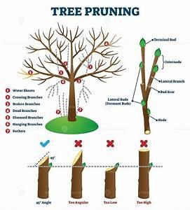 Tree Pruning Vector Illustration
