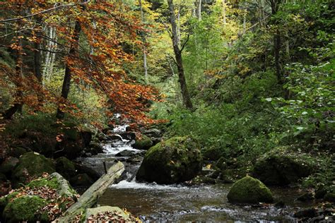 ravennaschlucht fotografien aus dem schwarzwald dem
