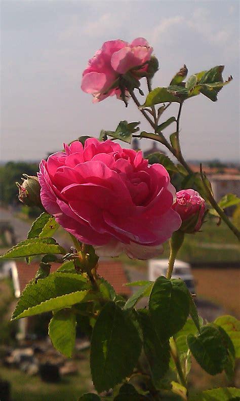Fotos gratis : pétalo primavera botánica vistoso