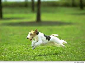 Running Dogs and Puppies