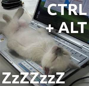 Sleeping Cat Maze and Funny Cat Memes | - image #1402686 ...