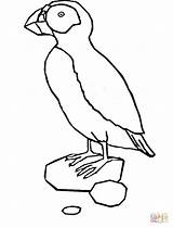 Puffin Coloring Pages Printable Template Clipart Popular Penguin Sketch sketch template