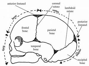 Antenatal Care Module  6  Anatomy Of The Female Pelvis And