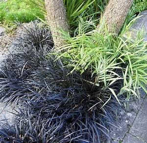 Kelli's Northern Ireland Garden: Winter Grasses