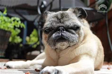 animals   masters   stink eye  pics