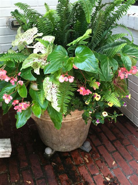 container gardening splendid spring and summer