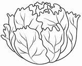 Coloring Lettuce Frutas Lechuga Vegetable Colorear Fruits Dibujos Coliflor Vegetables Imprimir Colorir Desenhos Criancas Legumes Paginas Libri Leek Orto Riscos sketch template