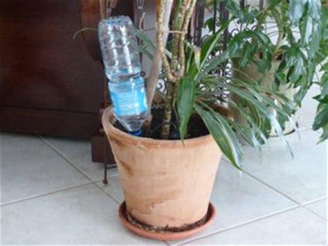 plantes vertes entretien pendant les vacances