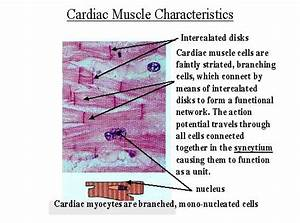 Flashcards - Muscle Tissue Part 1