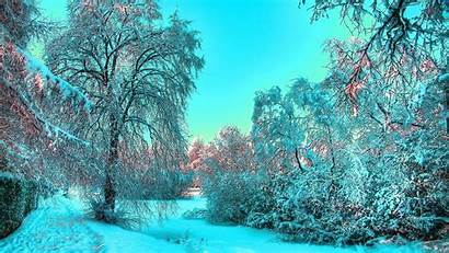 Winter Sunny Wallpapers Forest Wake Iphone Snow