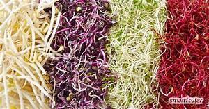 Gemüse Im Winter : vitaminreiches regionales obst und gem se im winter nutzen ~ Pilothousefishingboats.com Haus und Dekorationen