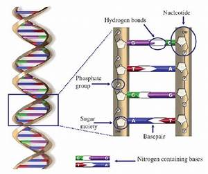 The Double Helix Structure Of Dna  It Is Constructed Of