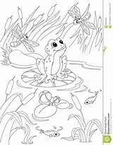 Pond Coloring Frog Illustration sketch template