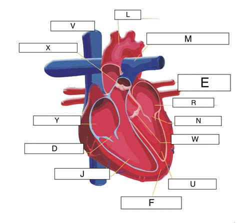 10 photos of the the human blood vessels labeled. 34 Label Blood Vessels Diagram - Labels Database 2020