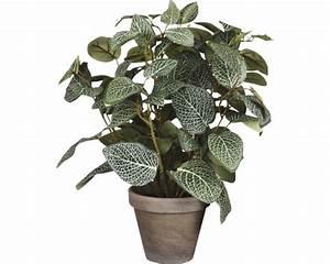 Pilea Pflanze Kaufen : kunstpflanze pilea gr n bei hornbach kaufen ~ Michelbontemps.com Haus und Dekorationen