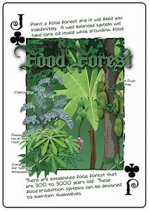 Plant, List, For, Food, Forest, In, North, West, United, States, Forest, Garden, Forum, At, Permies
