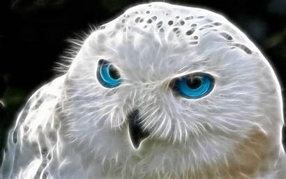 Owl Wallpapers Pixelstalk