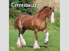 Clydesdales 2019 12 x 12 Inch Monthly Square Wall Calendar