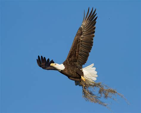 florida bald eagles and nature photography sarasota