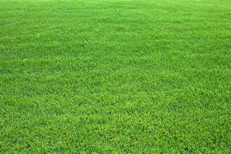 10 Reasons You Don't Need A Grass Lawn