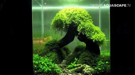 aquascaping  art   planted aquarium  nano