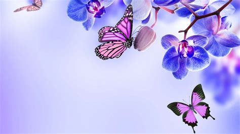 Butterfly Home Screen Wallpaper Images by Purple Butterfly Desktop Wallpapers Top Free Purple