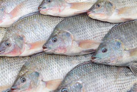 aquaculture  threatening  native fish species