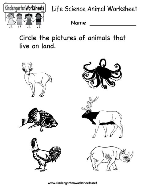 free worksheets for kindergarten science 12 best images of animal worksheets for kindergarten