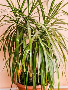 Skinny, Leaves, On, Plants, U2013, Information, About, Leaves, That, Are, Long, And, Thin