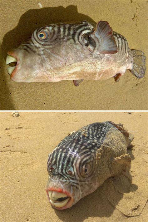 bizarre deep sea creatures   world barnorama
